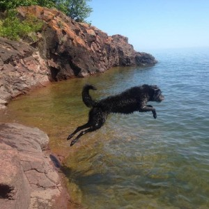 therapy dog lake superior